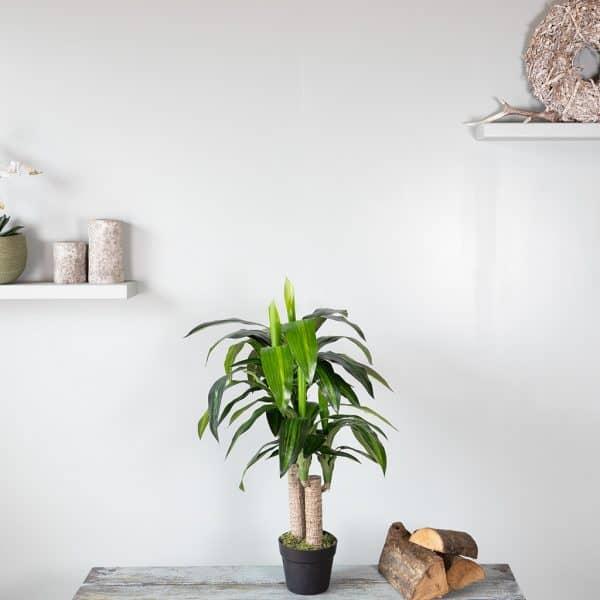 Kunstplant Dracaena fragrans 85 cm