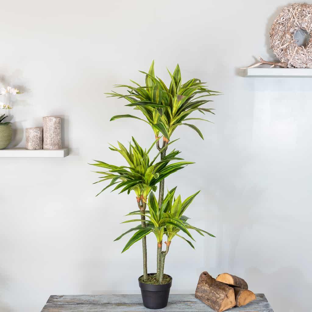 Kunstplant Dracaena lemon lime 125 2