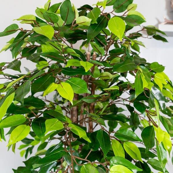 Kunstplant Ficus groen 120 blad