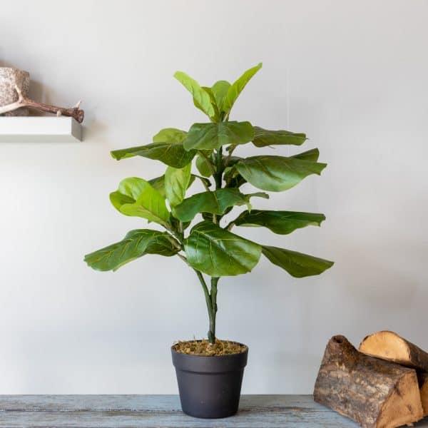 Kunstplant Ficus lyrata 70 cm