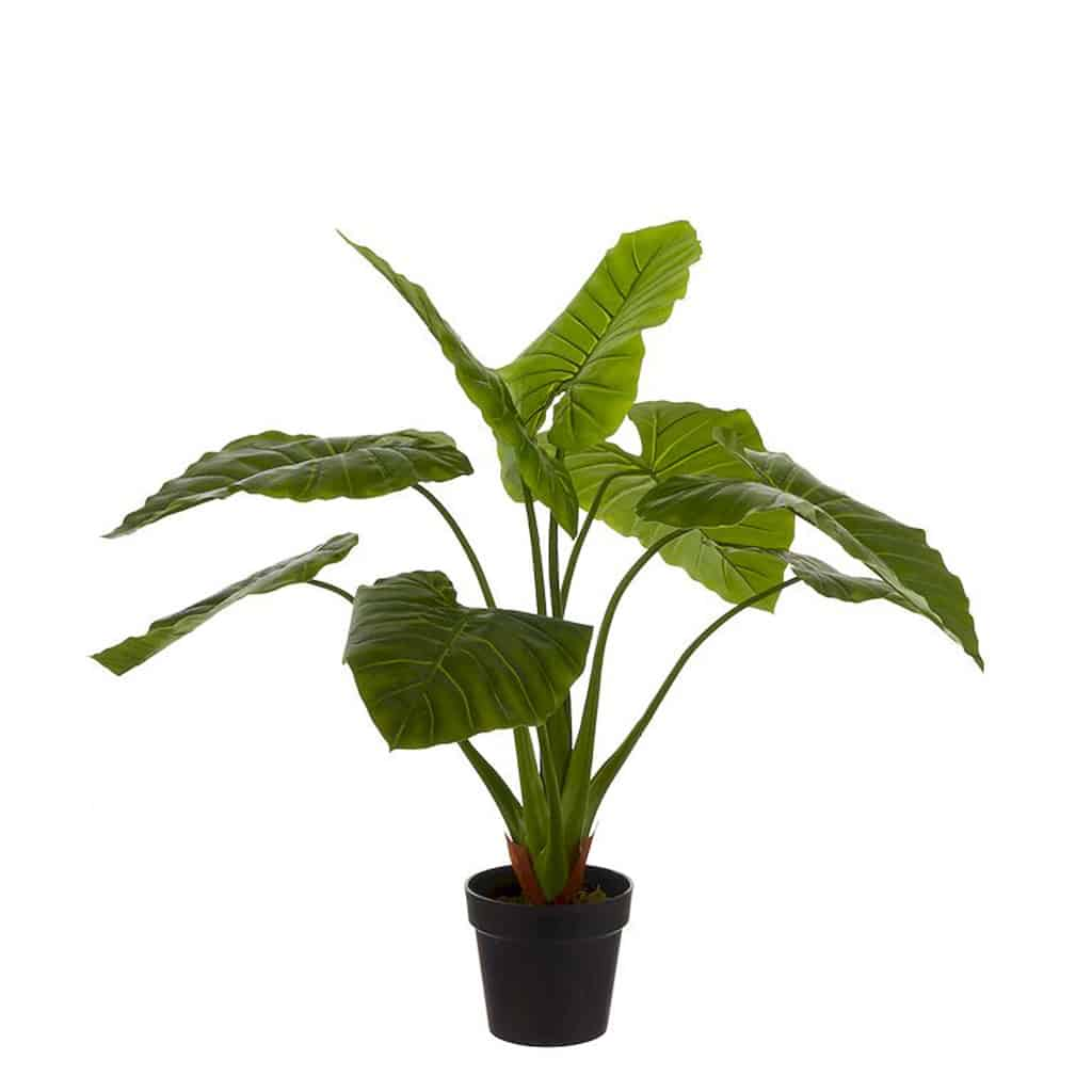 Philodendron 100 cm resultaat