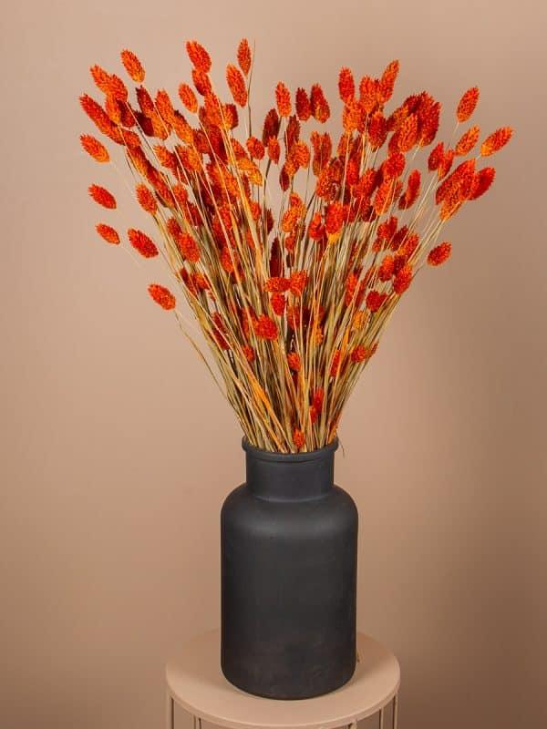 Vaas phalaris oranje